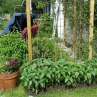 reeler växtstöd blir vindskydd