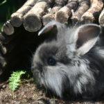 2009 - kaninungarna flyttar in