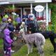 5-års-kalas med ösregn och alpackor på besök